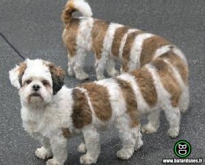 chien de garde -robe